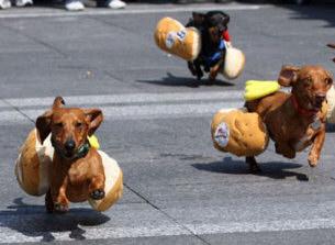 Baby Dachshund In Hotdog Bun Dachsies with moxie: our dear friend ...