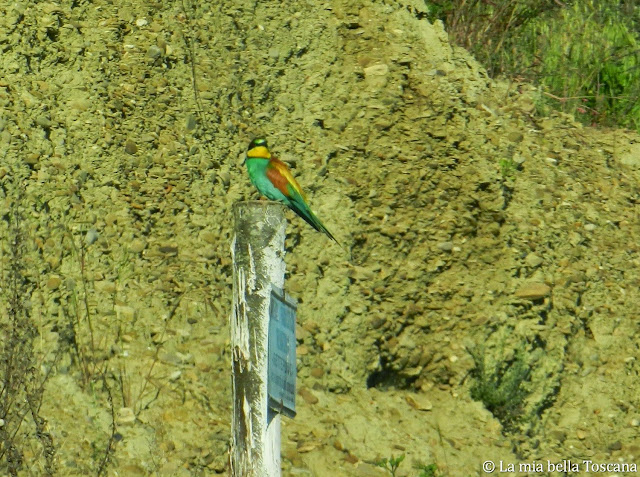 Uccelli delle aree protette della Toscana