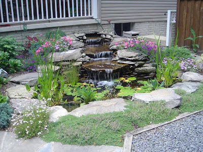 Effective Pond Care Tips
