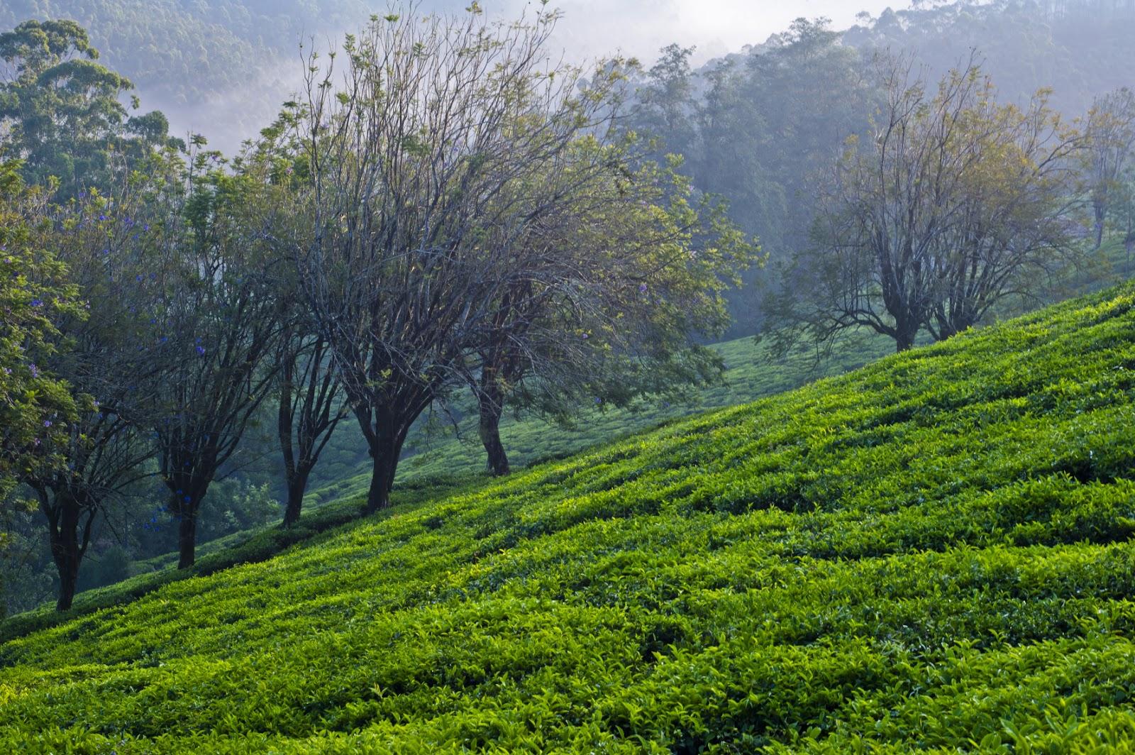 Banco de im genes 20 paisajes naturales casas rurales for Paisajes para una pared