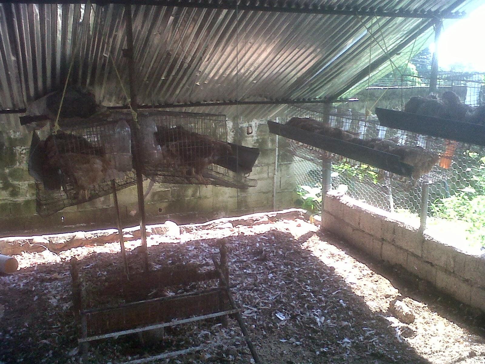 Casa sostenible guanare portuguesa venezuela sistema de gallinas gallus domesticus en casa - Casas para gallinas ...