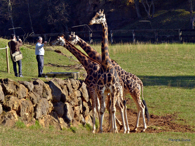 Tocar animales es posible en el Parque de la Naturaleza de Cabárceno