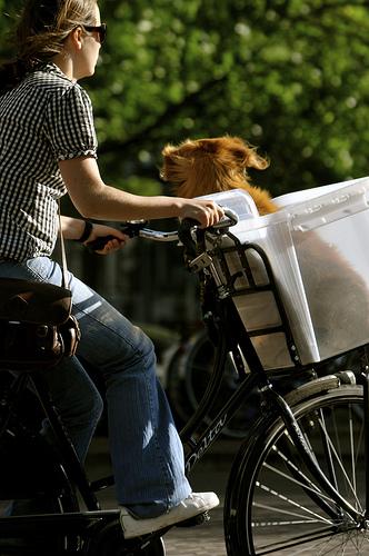 Bike com cesta para c es e crian as - Cestas para bicicletas ...
