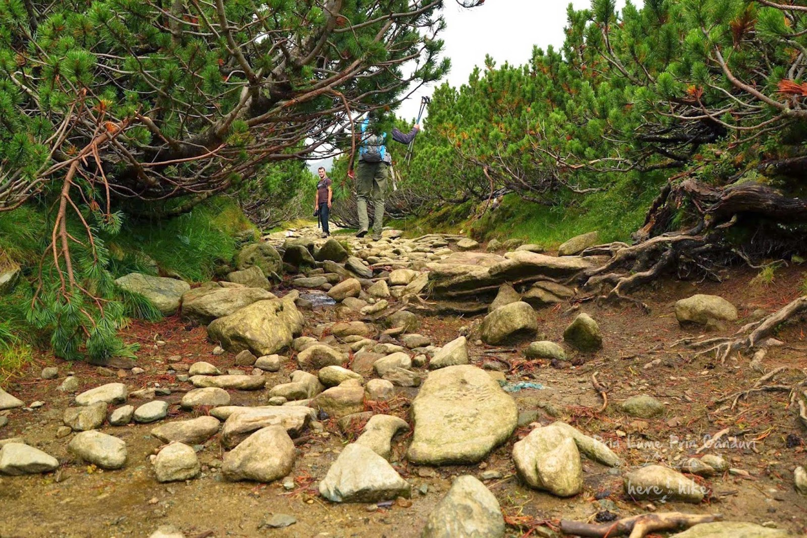 Custura-Peak-Hike-to-custura-path