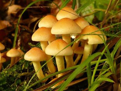 Defenisi Jamur dan Fungi Berdasarkan Biologi