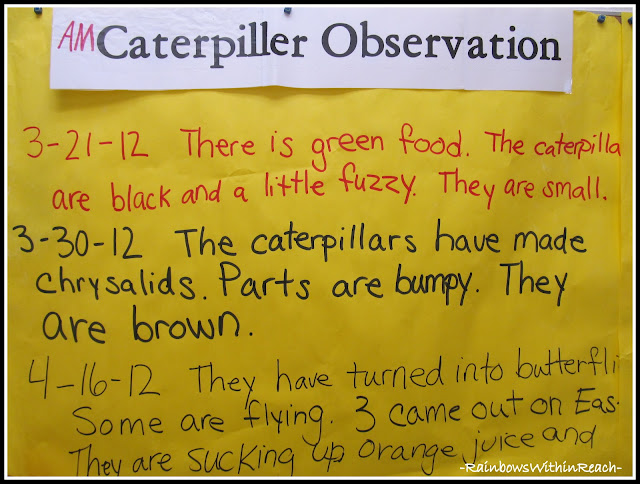 photo of: Caterpillar Observations in Kindergarten, Charted and Documented