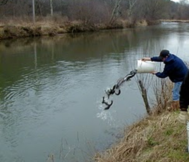 Harrisburg, PA ? Anglers from across the state have been helping the ...