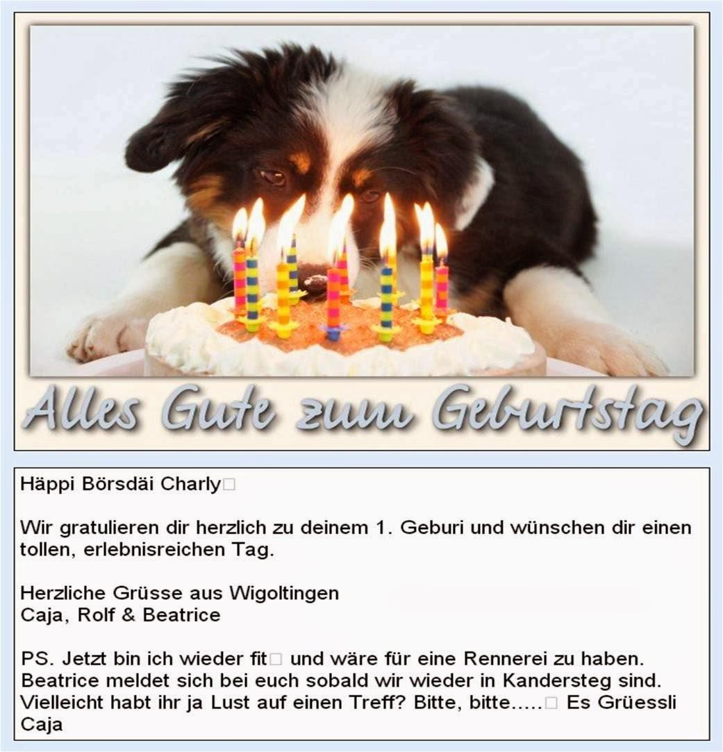 Border Terrier Charly erhält von seiner Schwester eine Geburtstagskarte