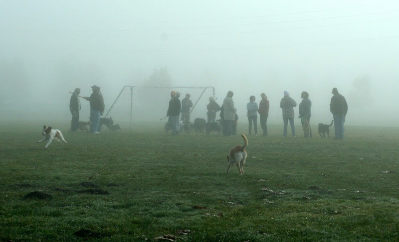 group of about 15 humans and scattered dogs standing in close proximity in the middle of a field, the fog is thick and heavy