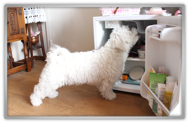 What's in my Beauty Fridge korean cosmetics skincare makeup kbeauty cute kawai refrigerator tag Jofee maltese puppy dog
