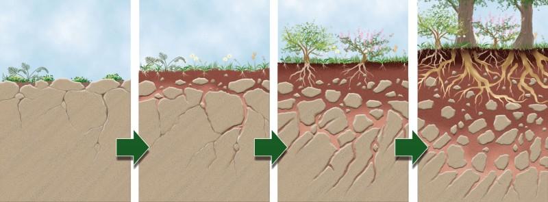 Collecta el suelo y su formaci n 2 tema 8 for Como se forma y desarrolla el suelo