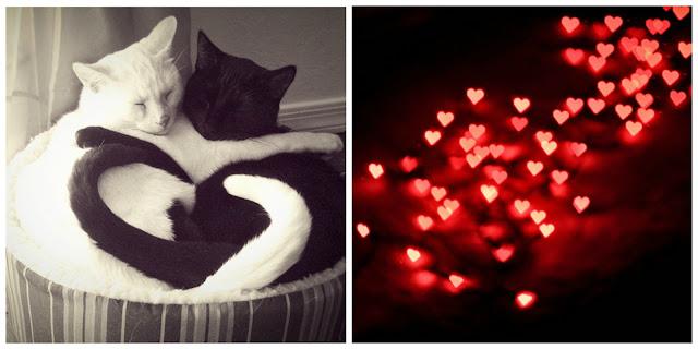 Cat Heart Eye Emoji