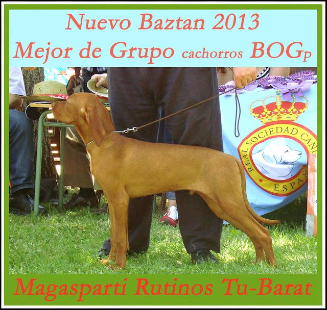 Concurso Nacional Canino Nuevo Baztán. Mejor Cachorro Grupo 7.