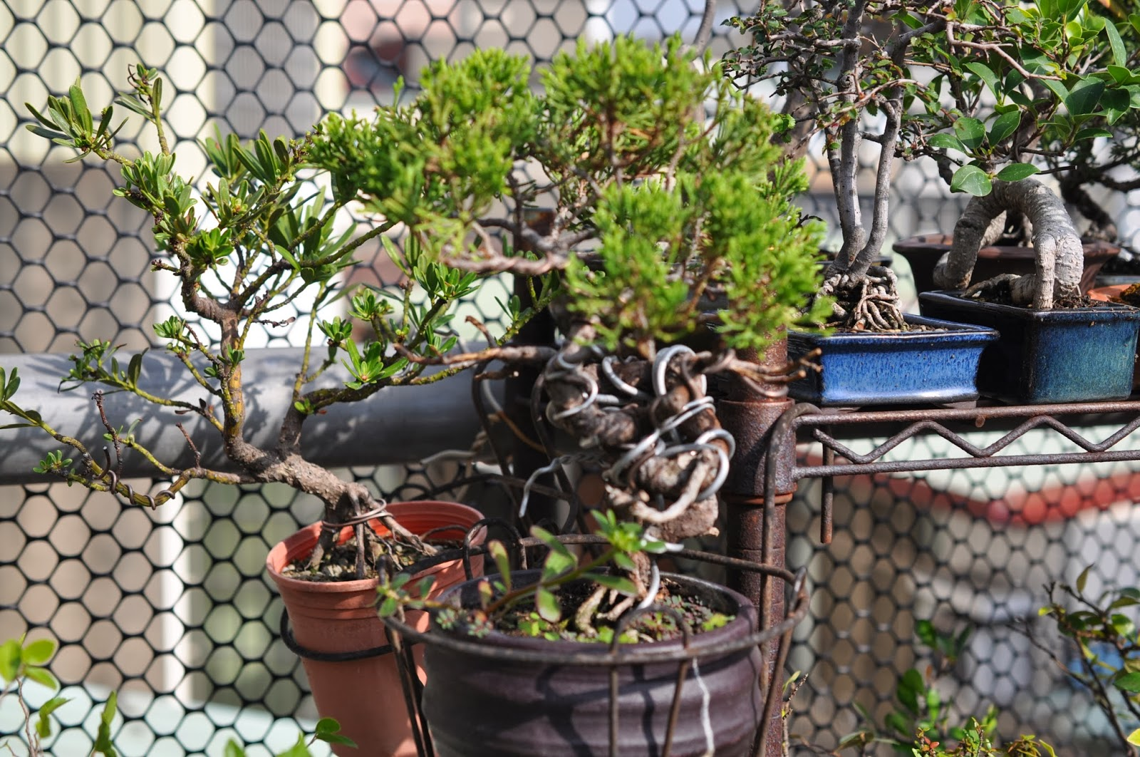 All In One Bonsai And Ceramics Mini Bonsai