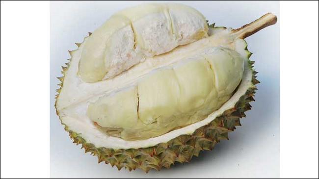 Durian Ajimah (Ciomas, Bogor) - www.jurukunci.net