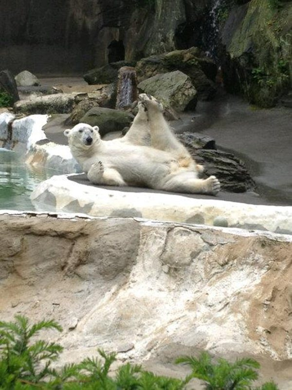 funny animal pictures, funny polar bear