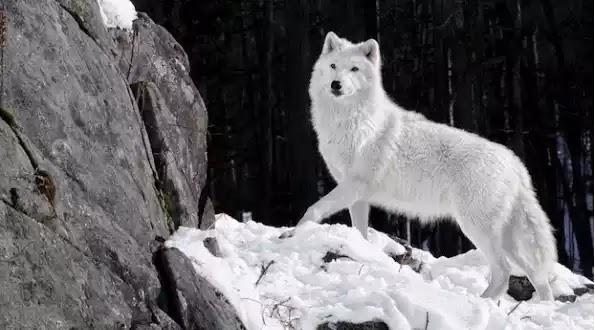 Νέα θεωρία για την προέλευση του σκύλου