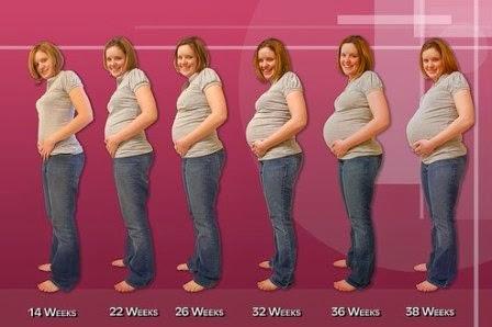 perkembangan kehamilan