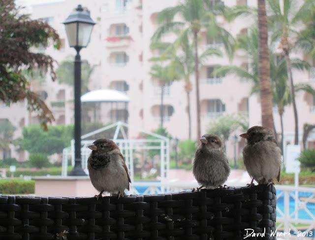 birds watching us eat at restaurant, 3 birds