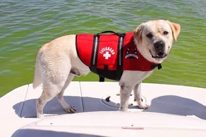 chaleco perro en malamarshop.com