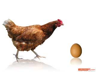 Ayam Apa Telor