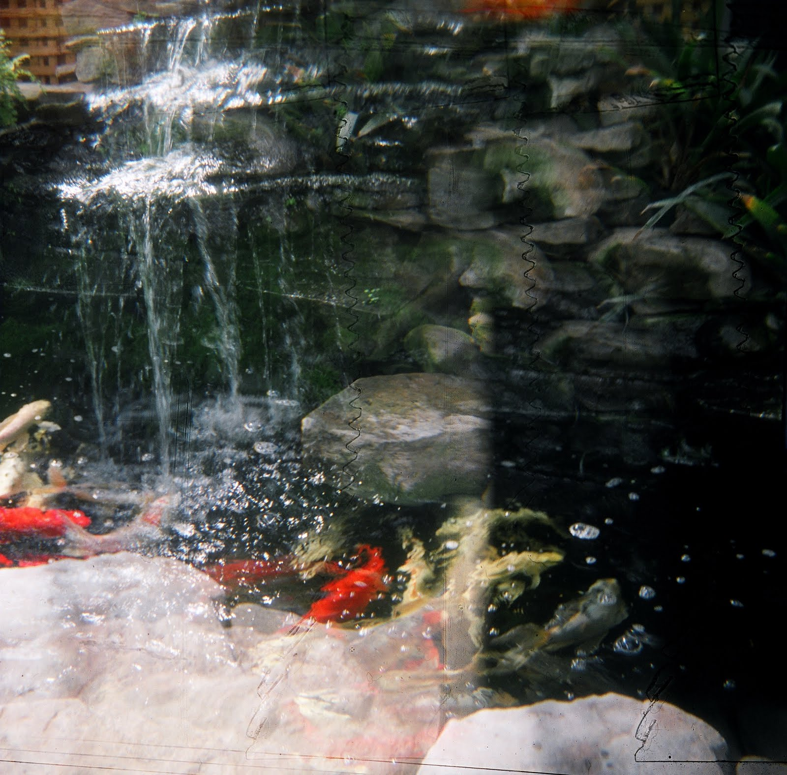 Pictures thoughts and comments holga summertime in vermont for Indoor koi fish pond