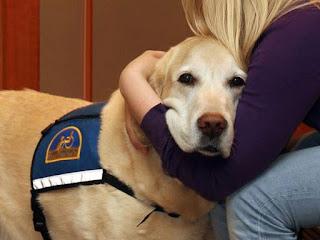 Cachorros são treinados por dois anos para dar suporte emocional às vítimas em tribunais nos Estados Unidos (Foto: Reprodução/Facebook/Courthouse Dogs Foundation)
