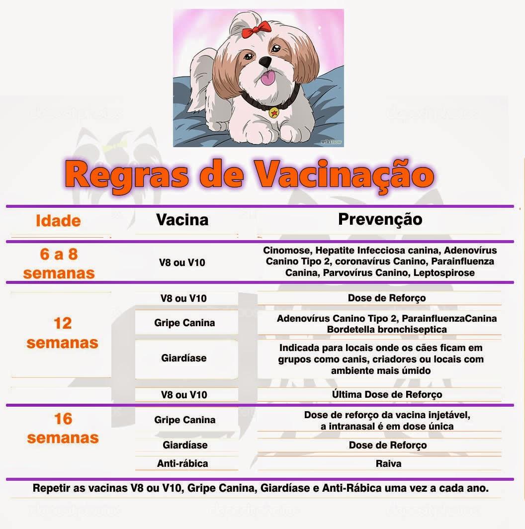 calendario-vacinacao-filhote.jpg