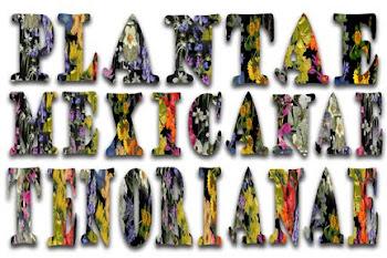 Paisajes y formas de vida de la flora mexicana