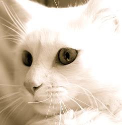 Ayer vi a un gato, y me acordé de vos.