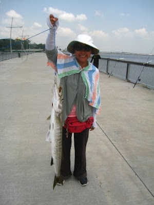 Barracuda also know as Saw Kun 沙君 or Ikan Kacang weighing 3kg plus Caught by Joanne At Woodland Jetty.