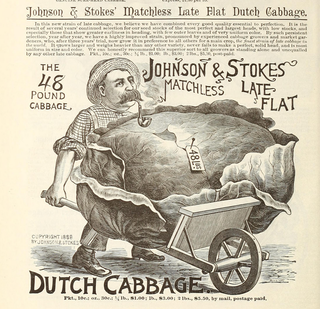 Stumpy, pipe smoking, wheelbarrow pushing man with giant cabbage.  Johnson and Stokes