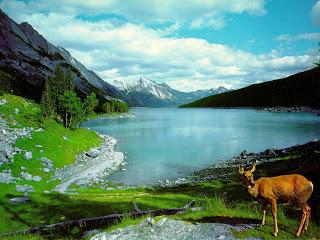 Nature Wallpaper part 4 | HD Wallpaper – High Definition Wallpapers