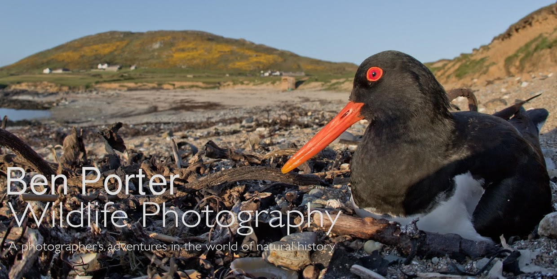 Ben Porter Wildlife Photography