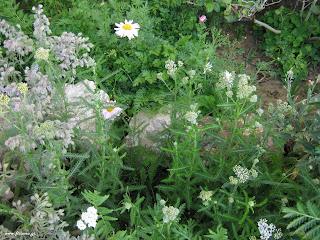Πυρετός: βότανα και φυσικά γιατροσόφια