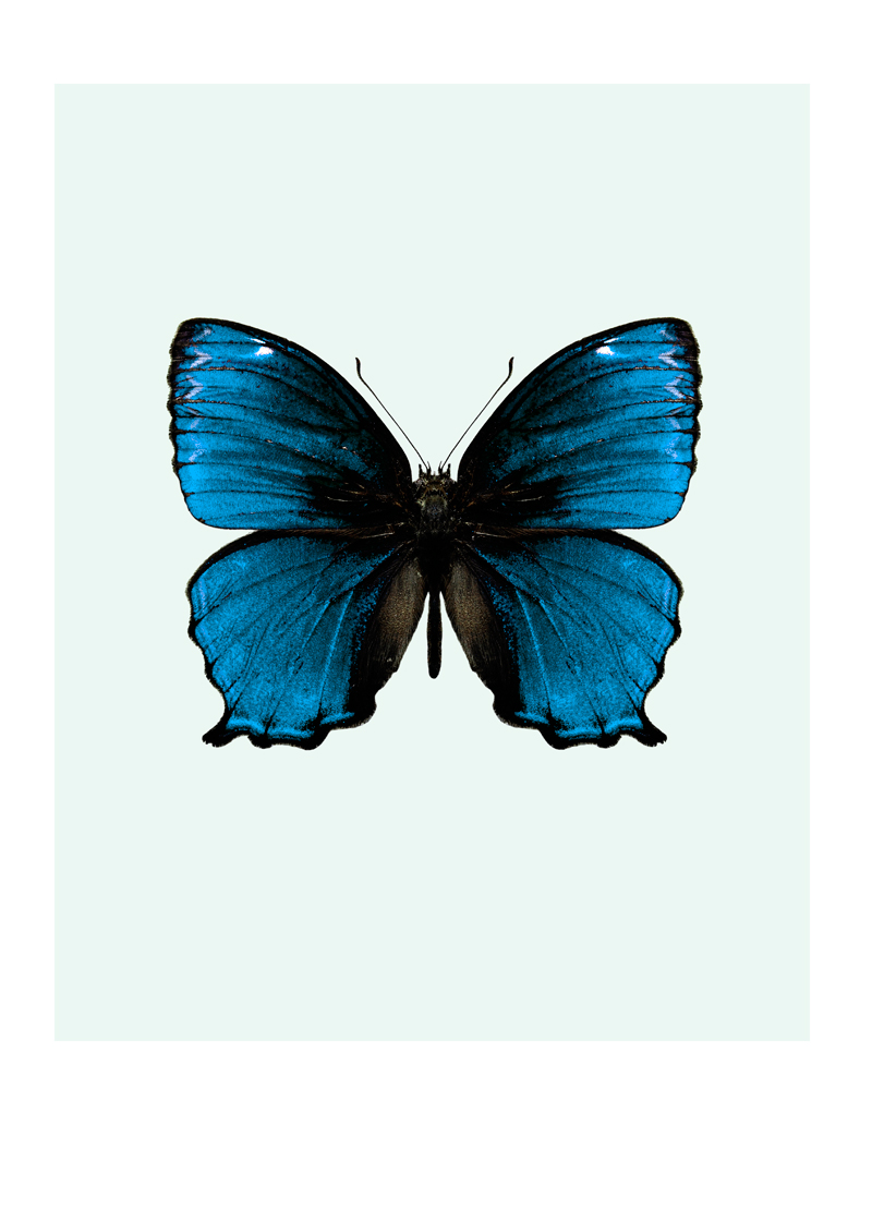 Butterfly Photo Print For Sale From A Selection @ nicolettavintage