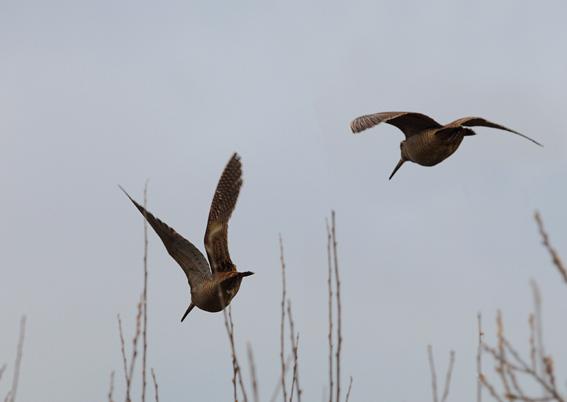 La chasse carcans la chasse a carcans dernieres nouvelles de juin 2011 - Chasse oiseaux electronique ...