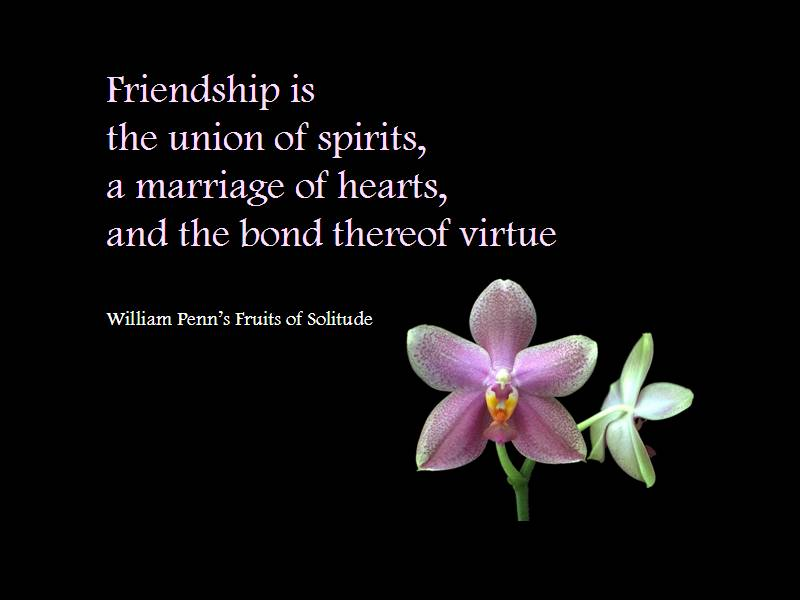 cute friendship quotes inspiring friends poems