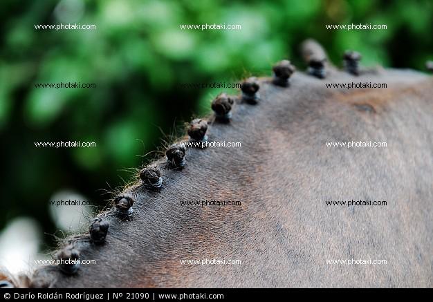 Los caballos: Peinados para nuestros caballos