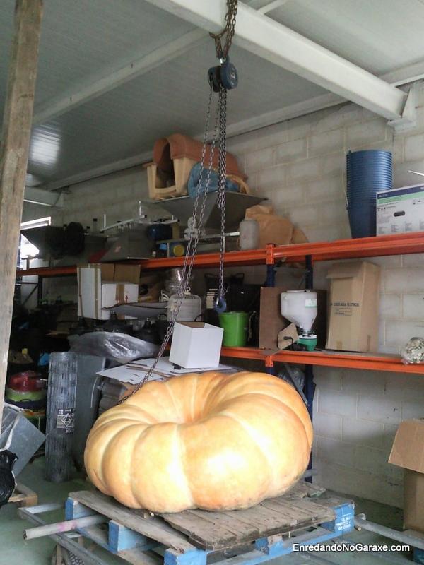 Preparados para poner la calabaza gigante y los palets en el suelo, http://www.enredandonogaraxe.com