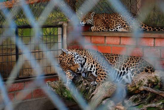 El Alcalde se desentiende del traslado de los animales del zoo