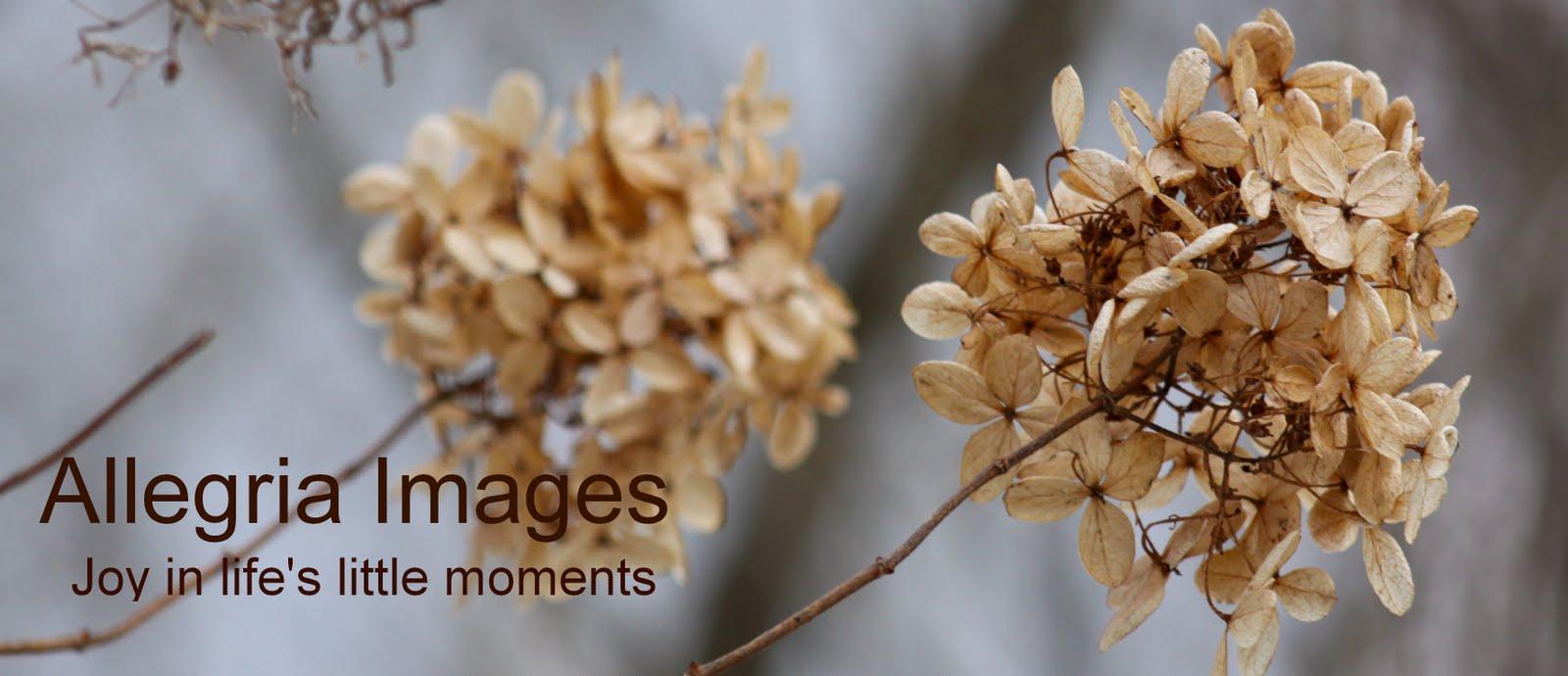 Allegria Images