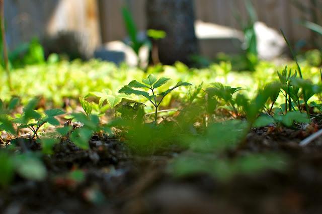 Grow, garden, spring, crocus, fern, cherub