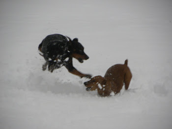 Wiley and Dash playing in the Jan snow