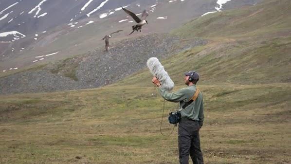إسترخي مع الإستماع إلى أصوات الطبيعة في جميع أنحاء العالم مع هذا الموقع الجميل