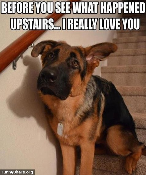 46626 MEME 8211 Guilty dog scott norton taylor mistakes made by cats and dogs