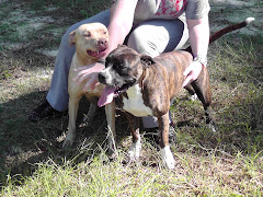 12/21/11 All dogs URGENT Carpathia Paws Rescue Asks for Your Help