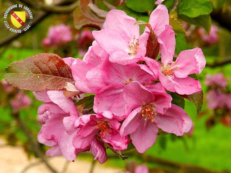 VILLERS-LES-NANCY (54) : Le jardin botanique du Montet-Pommier Belle Fleur