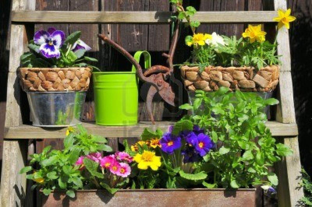 Decorar jardines con plantas dise os arquitect nicos for Decorar jardines con plantas