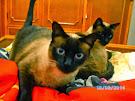 Nina e Amora